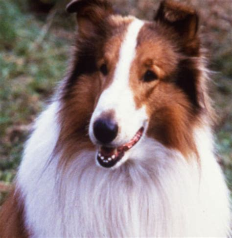 Can You Name These Famous Movie And TV Dogs? | Playbuzz
