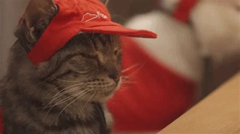 7 Adorable GIFs of Pizza Hut's Pizza Cats   GIPHY